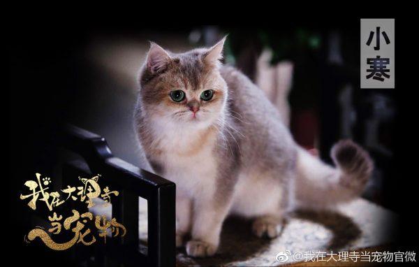 ซีรี่ย์จีนที่ทาสแมวต้องดู - 我在大理寺当宠物- I'm a Pet At Dali Temple - ฉันเป็นสัตว์เลี้ยงของศาลต้าหลี่