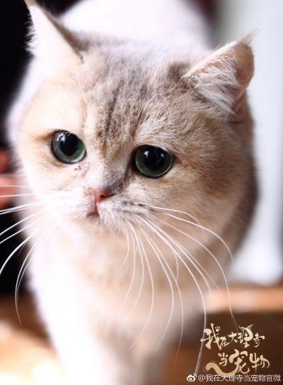 我在大理寺当宠物- I'm a Pet At Dali Temple - ฉันเป็นสัตว์เลี้ยงของศาลต้าหลี่