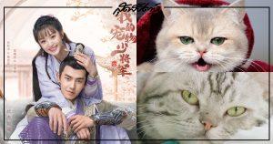 ซีรี่ย์จีนที่ทาสแมวต้องดู - ซีรี่ย์จีน - ซีรี่ย์จีนเก่าๆ - ซีรี่ย์จีนปี 2021 - ซีรี่ย์จีนแนวโรแมนติก - ซีรี่ย์จีนทาสแมว - ซีรี่ย์จีนย้อนยุค - พระเอกจีน - พระเอกซีรี่ย์จีน - นางเอกจีน - นางเอกซีรี่ย์จีน - บันเทิงจีน - ข่าวจีน - สกู๊ปจีน - 我的寵物少將軍 - Be My Cat - 报告王爷王妃是只猫- My Fantastic Mrs Right - 我在大理寺当宠物- I'm a Pet At Dali Temple - ฉันเป็นสัตว์เลี้ยงของศาลต้าหลี่